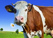 Victorian Government $5,000 Dairy Development Grants program – now open